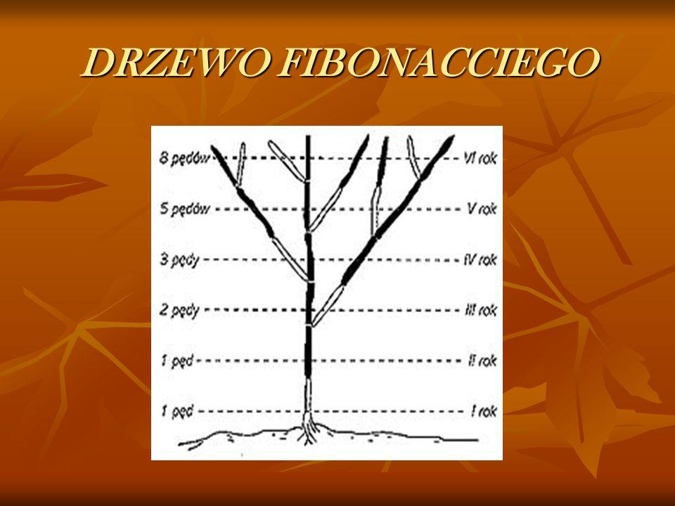 DRZEWO FIBONACCIEGO