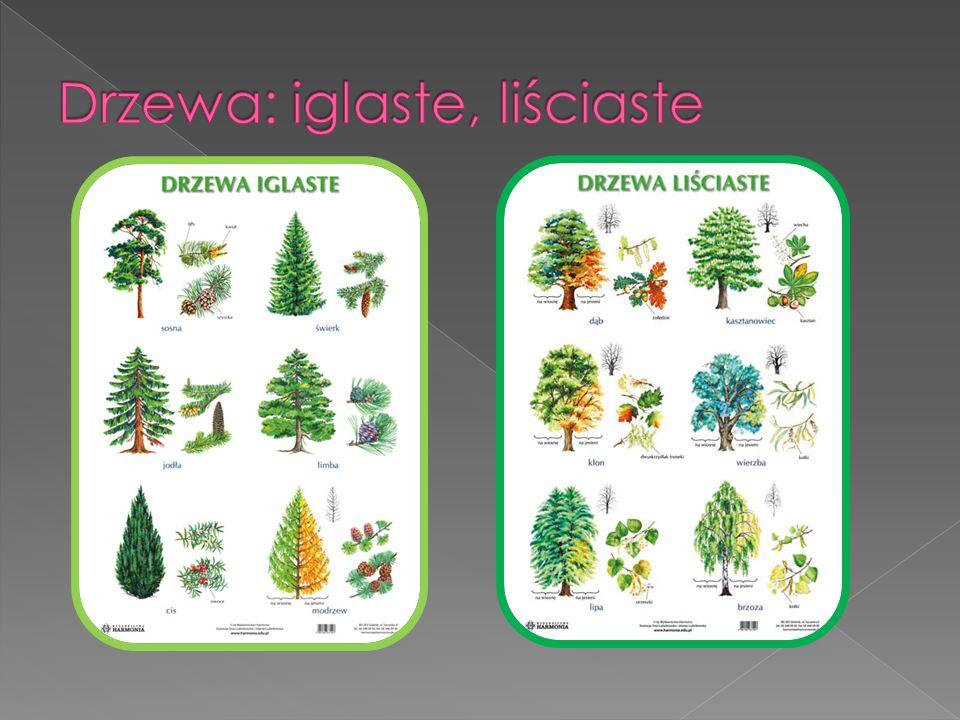 Drzewa: iglaste, liściaste