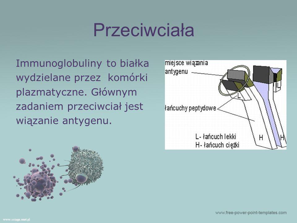 Przeciwciała Immunoglobuliny to białka wydzielane przez komórki