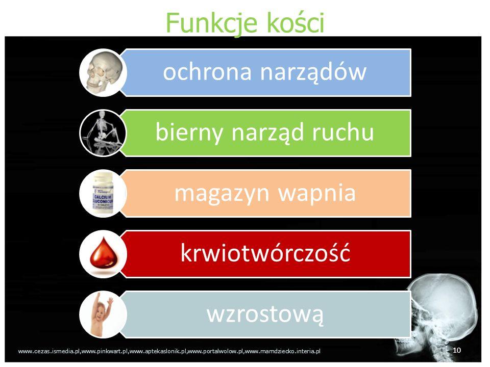 Funkcje kości ochrona narządów bierny narząd ruchu magazyn wapnia
