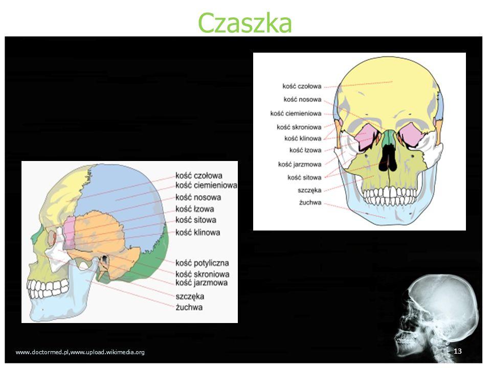 Czaszka www.doctormed.pl,www.upload.wikimedia.org