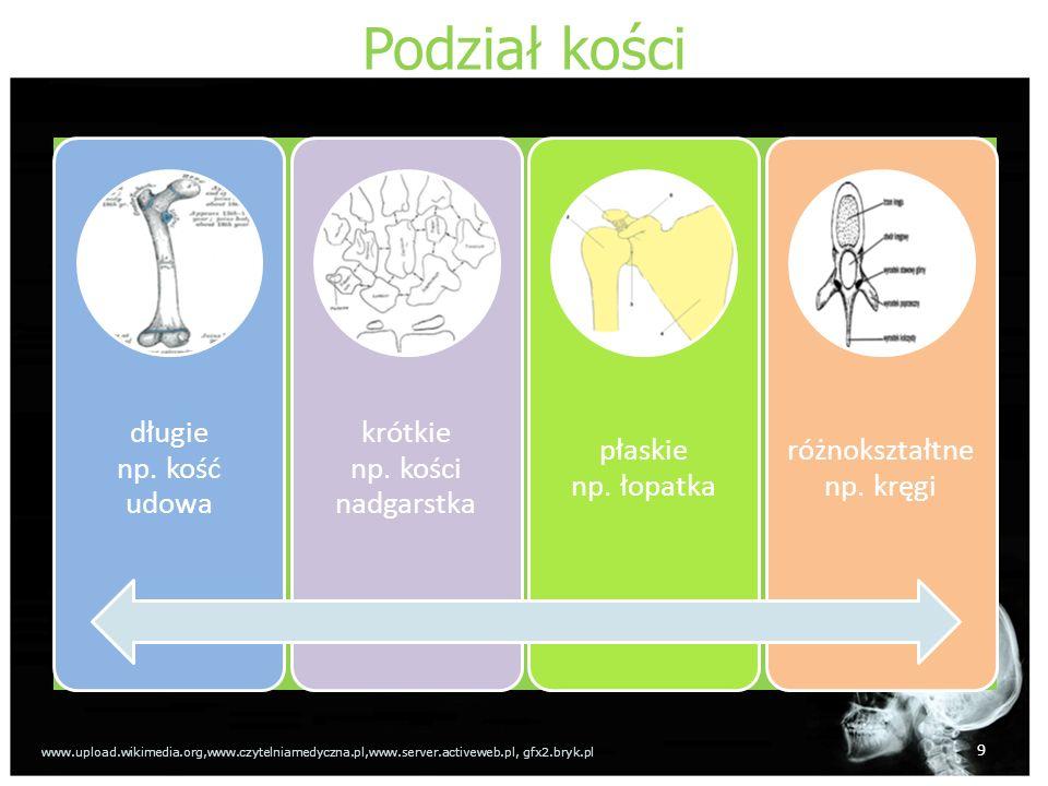 Podział kości długie np. kość udowa krótkie np. kości nadgarstka