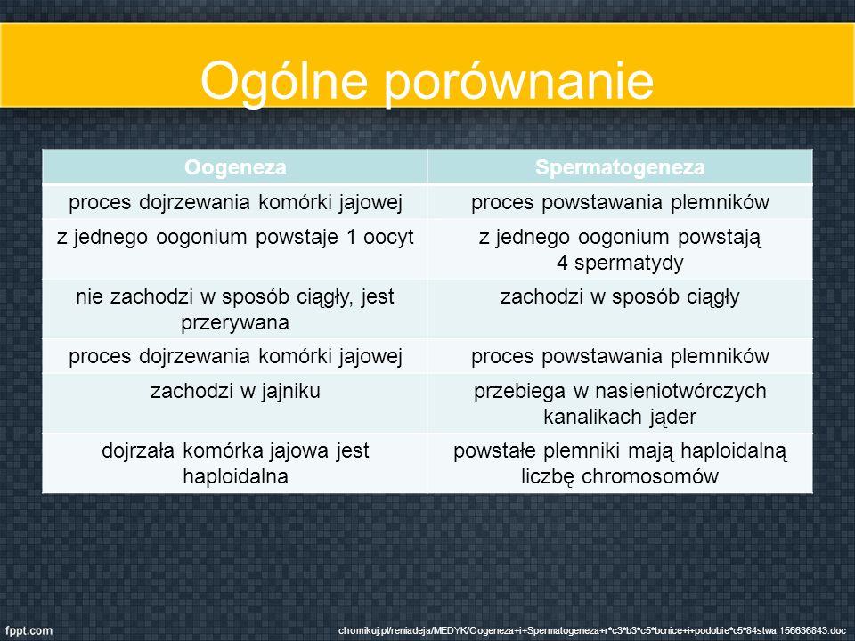 Ogólne porównanie Oogeneza Spermatogeneza