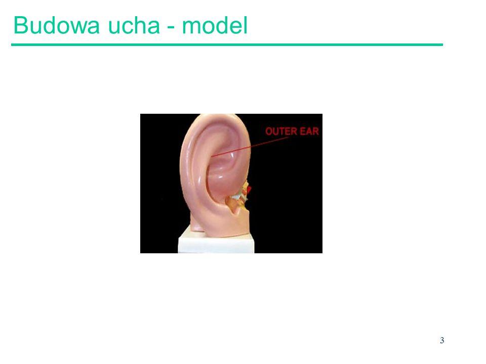 Budowa ucha - model