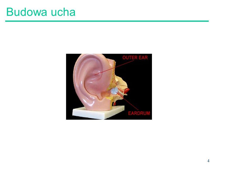 Budowa ucha