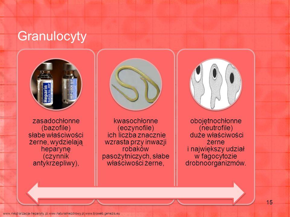 Granulocyty zasadochłonne (bazofile) słabe właściwości żerne, wydzielają heparynę (czynnik antykrzepliwy),