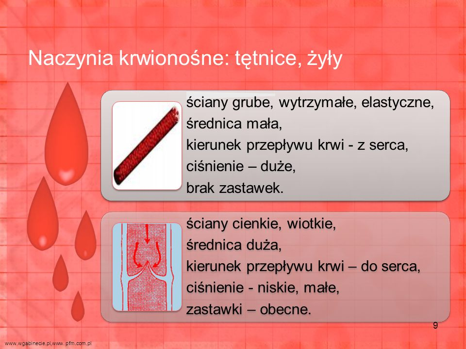 Naczynia krwionośne: tętnice, żyły