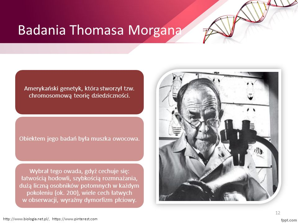 Badania Thomasa Morgana