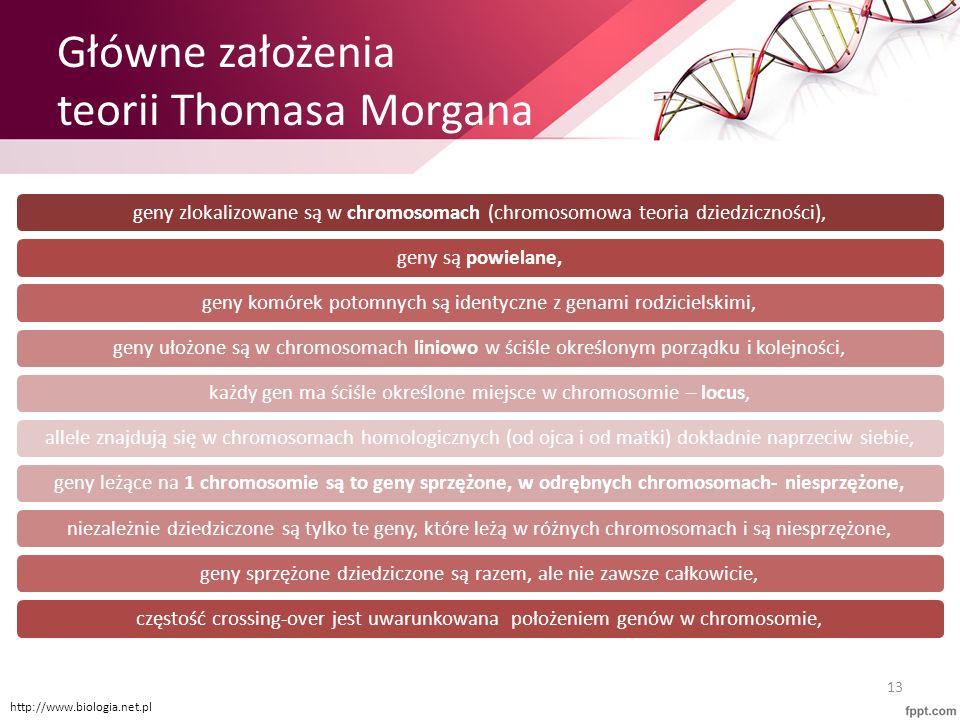 Główne założenia teorii Thomasa Morgana