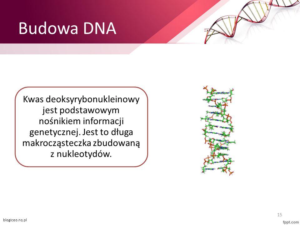 Budowa DNA Kwas deoksyrybonukleinowy jest podstawowym nośnikiem informacji genetycznej. Jest to długa makrocząsteczka zbudowaną z nukleotydów.