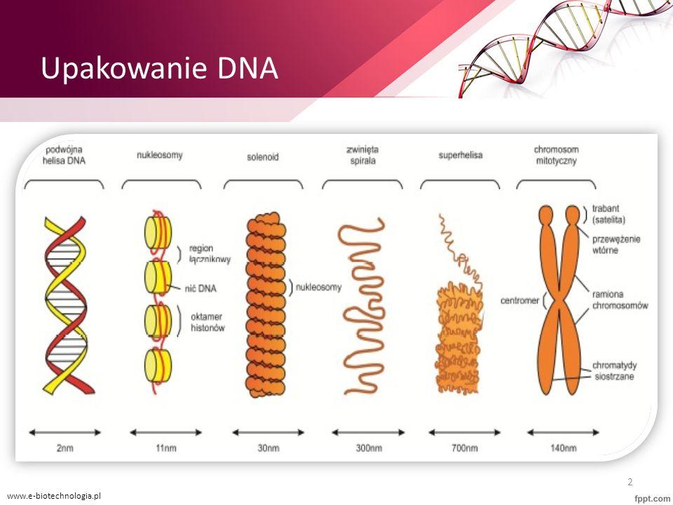 Upakowanie DNA www.e-biotechnologia.pl