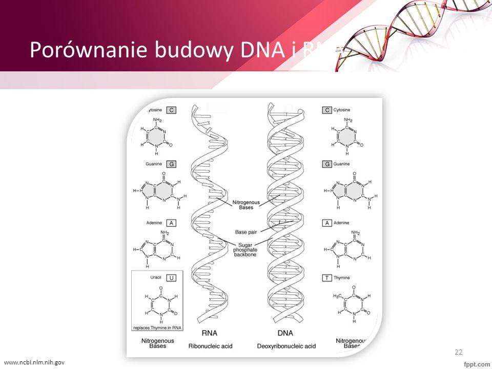 Porównanie budowy DNA i RNA