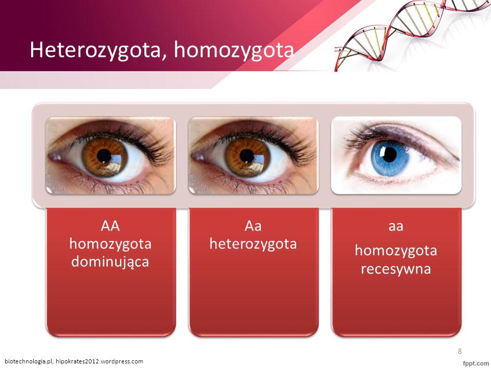 Heterozygota, homozygota