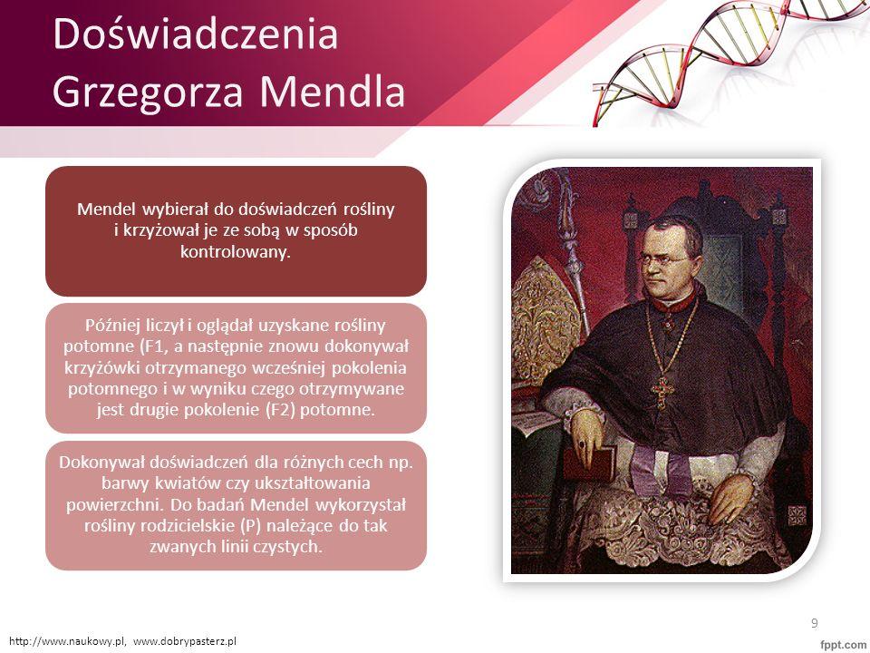 Doświadczenia Grzegorza Mendla
