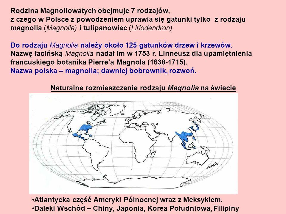 Rodzina Magnoliowatych obejmuje 7 rodzajów,