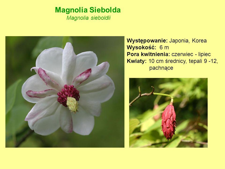 Magnolia Siebolda Magnolia sieboldii Występowanie: Japonia, Korea