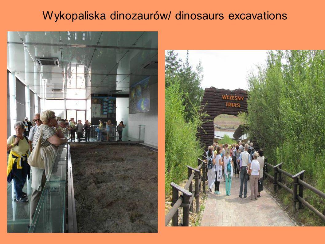 Wykopaliska dinozaurów/ dinosaurs excavations