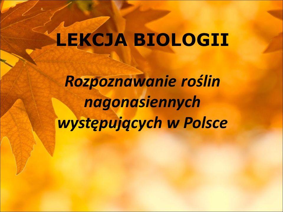 LEKCJA BIOLOGII Rozpoznawanie roślin nagonasiennych występujących w Polsce