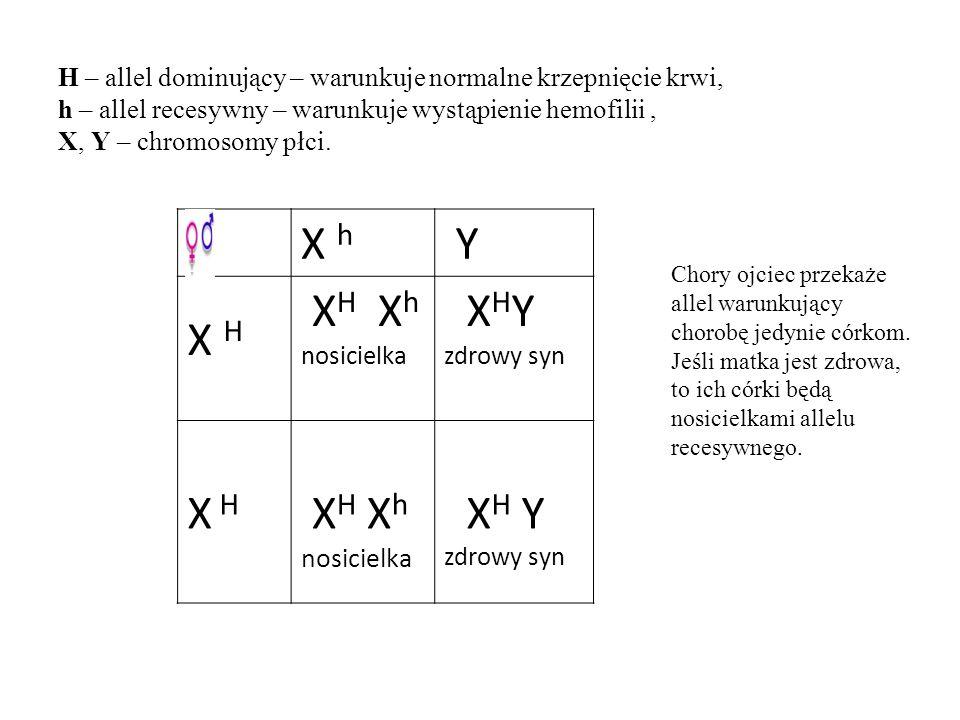 H – allel dominujący – warunkuje normalne krzepnięcie krwi, h – allel recesywny – warunkuje wystąpienie hemofilii , X, Y – chromosomy płci.