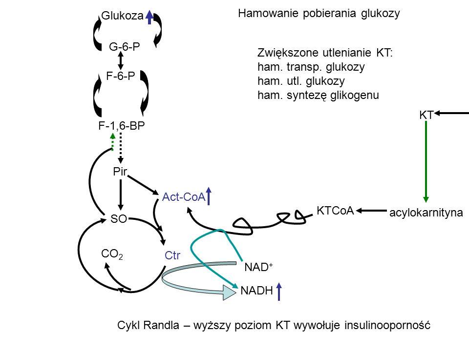 Glukoza Hamowanie pobierania glukozy. G-6-P. Zwiększone utlenianie KT: ham. transp. glukozy. ham. utl. glukozy.