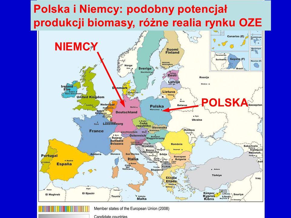 Polska i Niemcy: podobny potencjał produkcji biomasy, różne realia rynku OZE