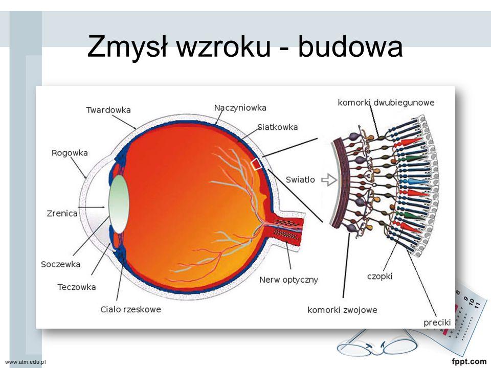 Zmysł wzroku - budowa www.atm.edu.pl