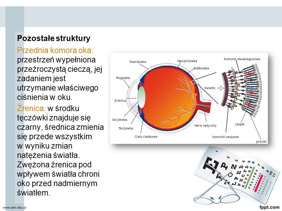 Pozostałe struktury Przednia komora oka: przestrzeń wypełniona przeźroczystą cieczą, jej zadaniem jest utrzymanie właściwego ciśnienia w oku.