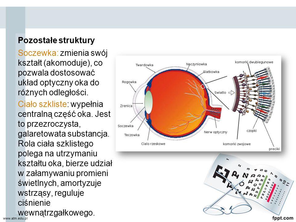 Pozostałe struktury Soczewka: zmienia swój kształt (akomoduje), co pozwala dostosować układ optyczny oka do różnych odległości.
