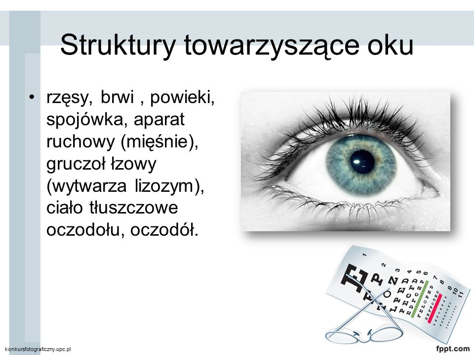Struktury towarzyszące oku