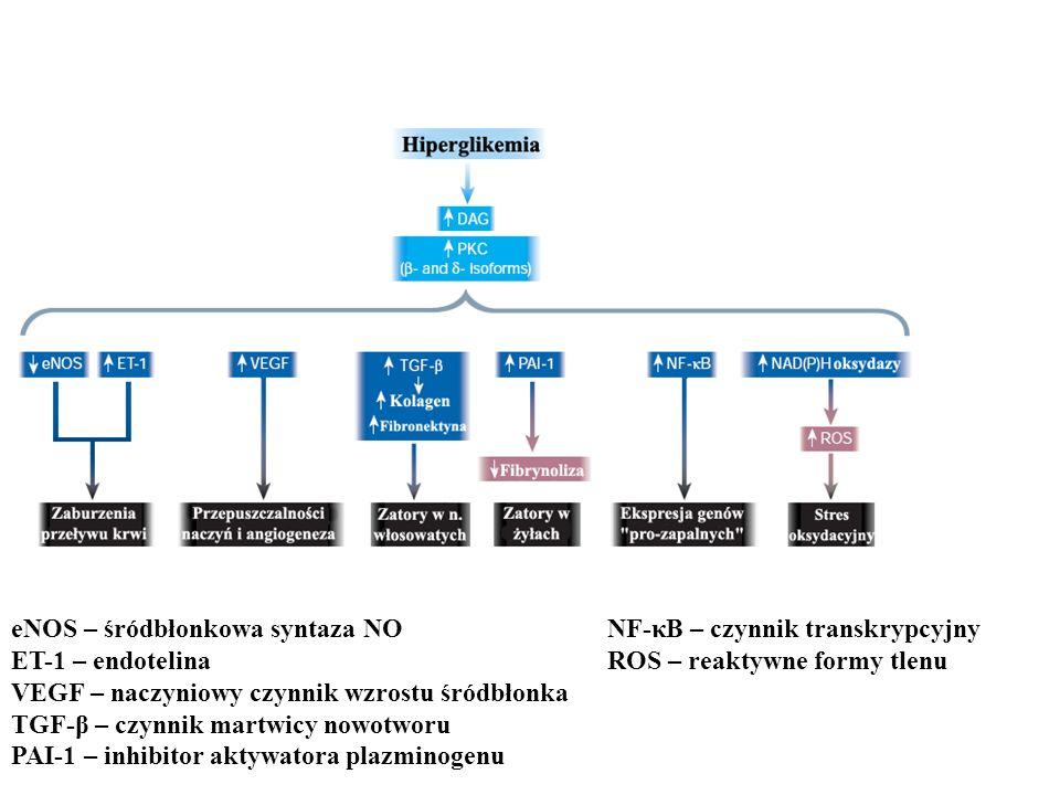 eNOS – śródbłonkowa syntaza NO ET-1 – endotelina