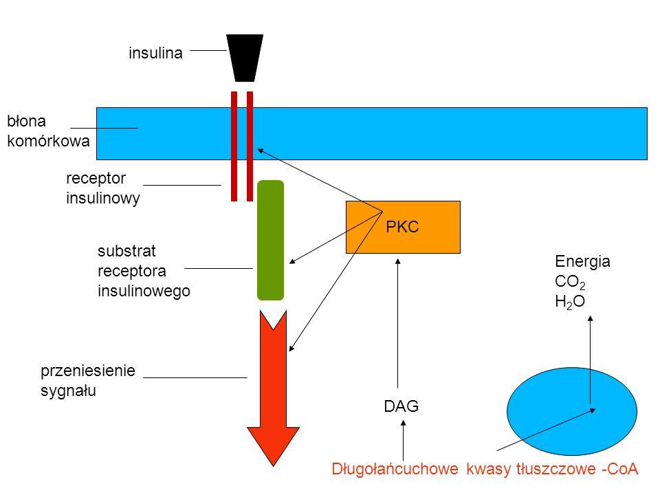 insulina błona. komórkowa. receptor. insulinowy. PKC. substrat. receptora. insulinowego. Energia.