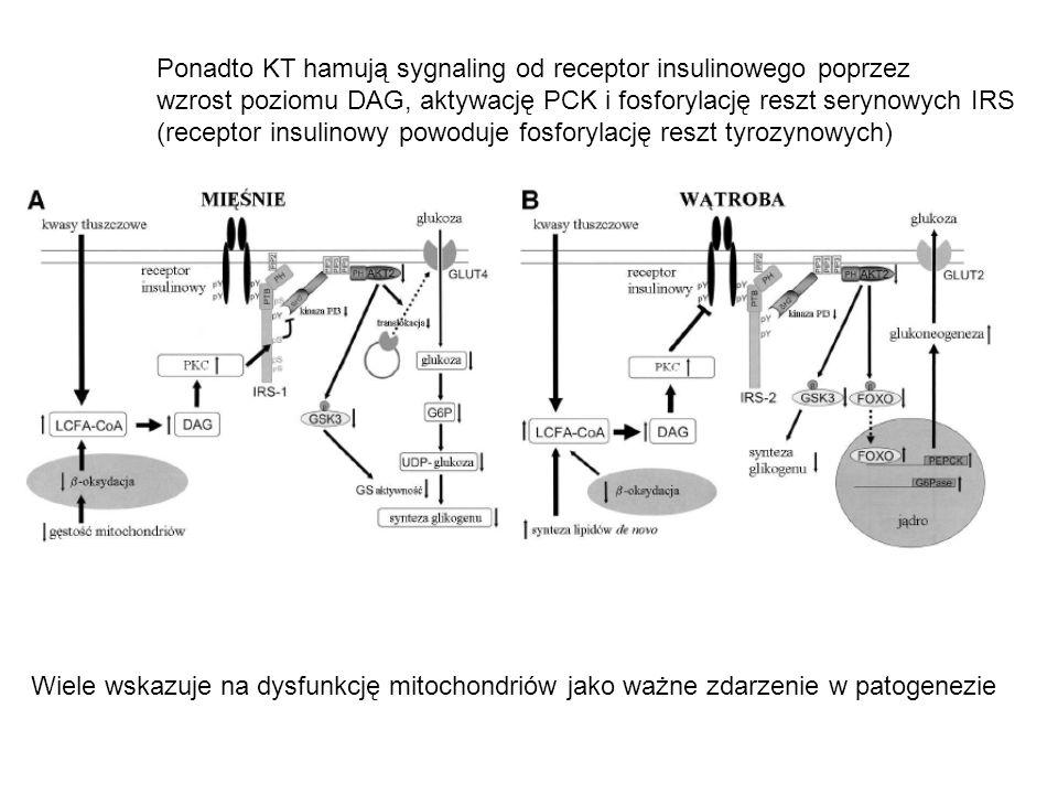Ponadto KT hamują sygnaling od receptor insulinowego poprzez