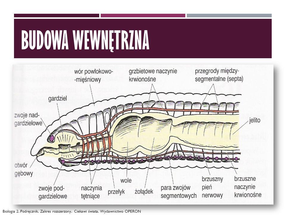 budowa wewnętrzna Biologia 2. Podręcznik. Zakres rozszerzony. Ciekawi świata. Wydawnictwo OPERON