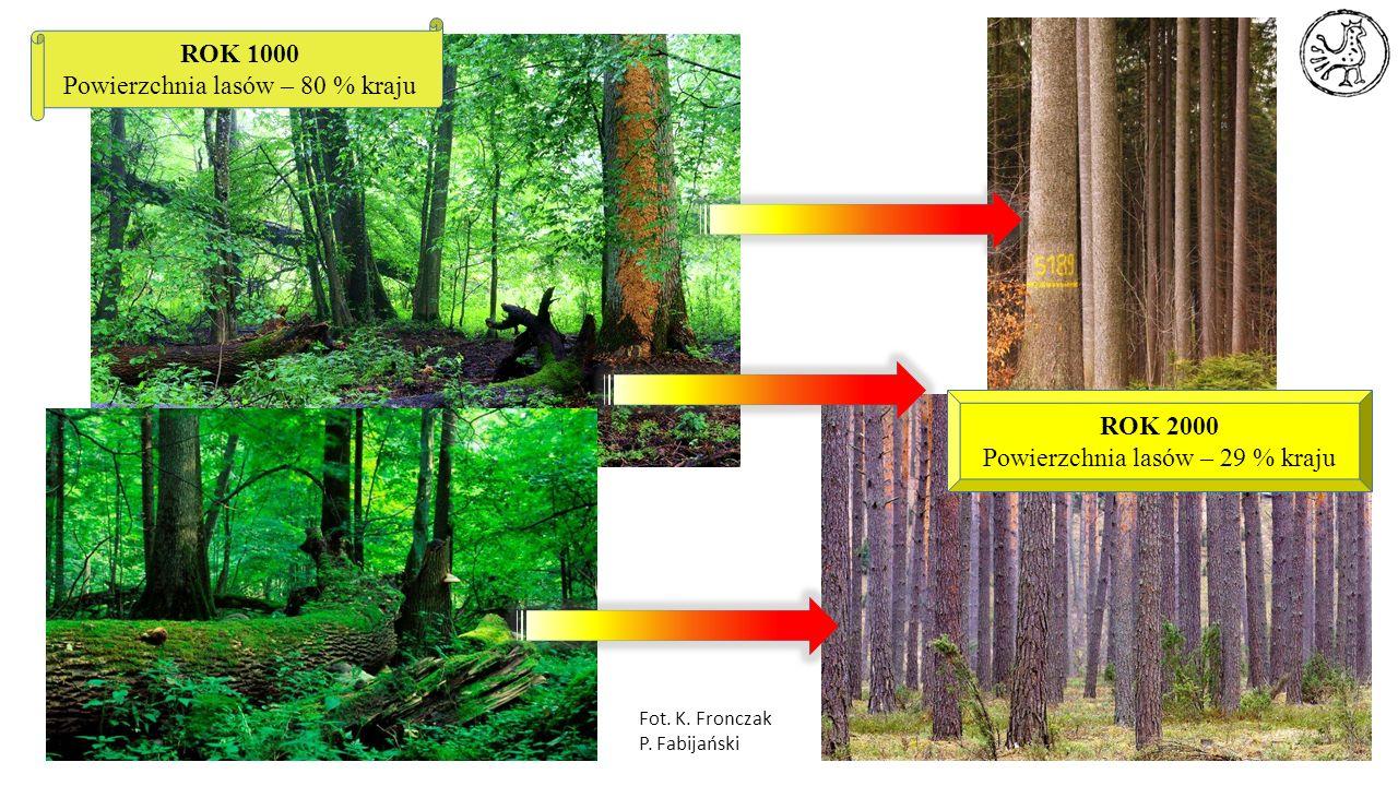 Powierzchnia lasów – 80 % kraju