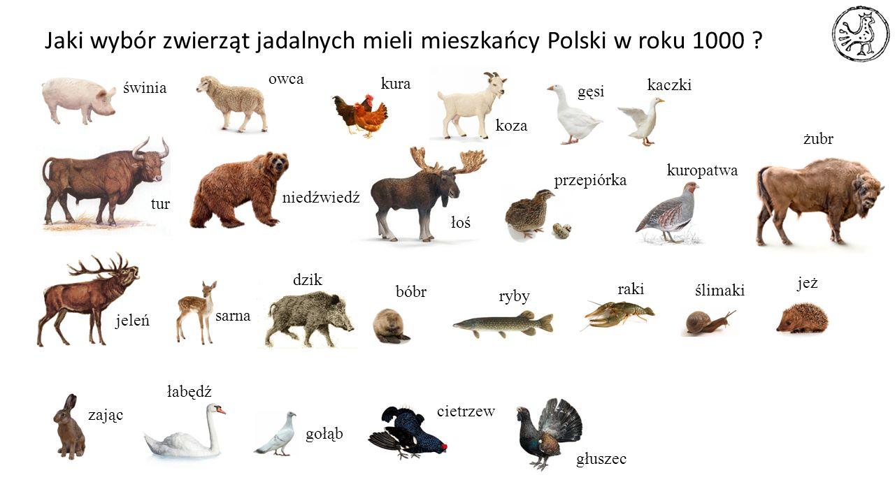Jaki wybór zwierząt jadalnych mieli mieszkańcy Polski w roku 1000