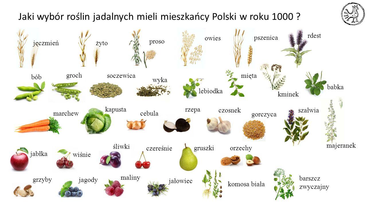 Jaki wybór roślin jadalnych mieli mieszkańcy Polski w roku 1000