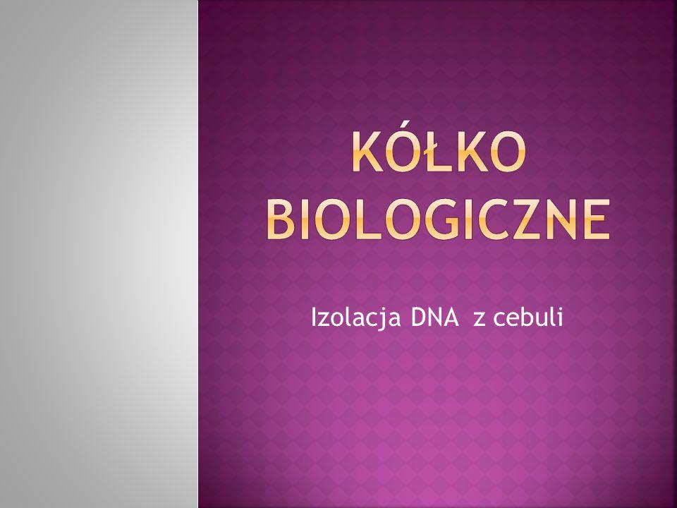 Kółko biologiczne Izolacja DNA z cebuli