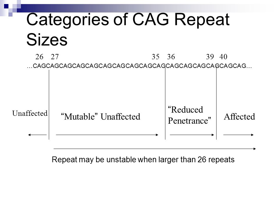Categories of CAG Repeat Sizes