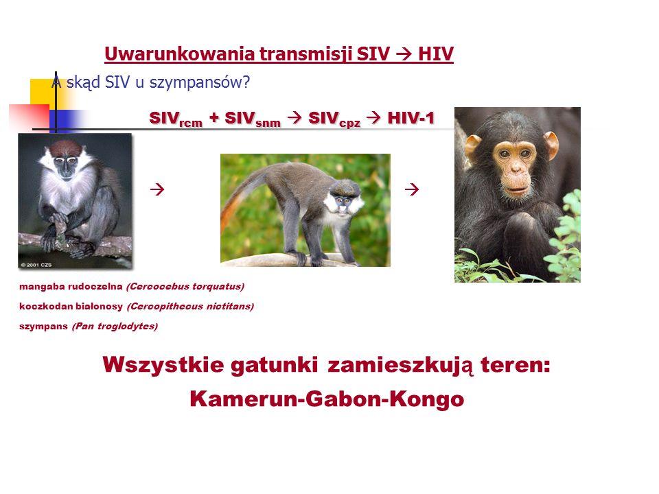Uwarunkowania transmisji SIV  HIV