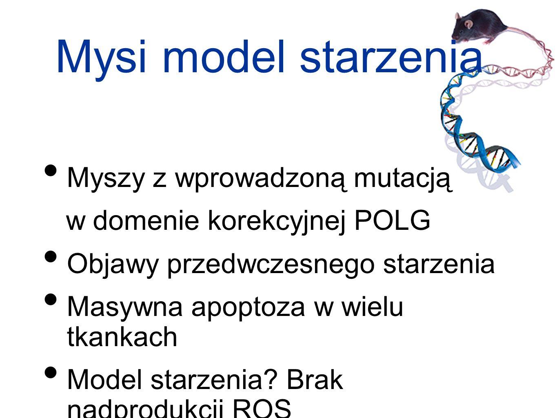 Mysi model starzenia Myszy z wprowadzoną mutacją