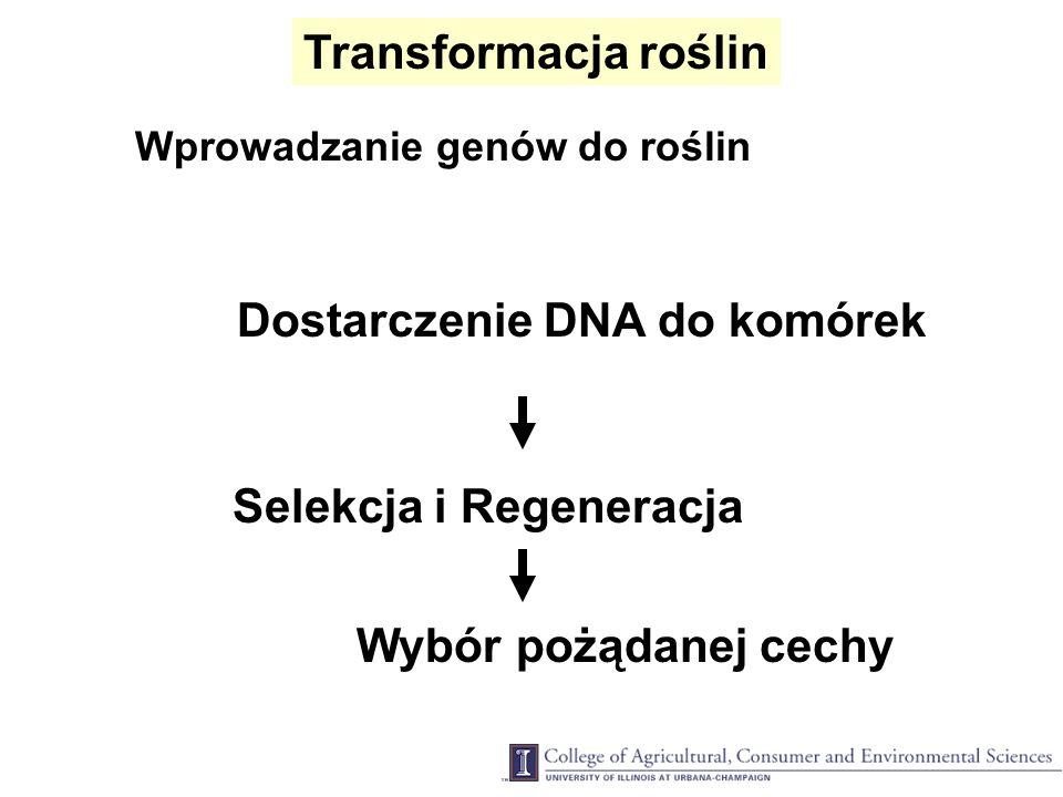 Dostarczenie DNA do komórek