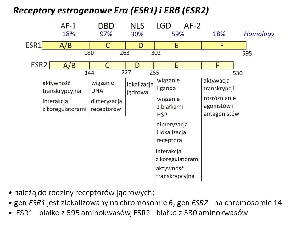 Receptory estrogenowe Erα (ESR1) i ERβ (ESR2)