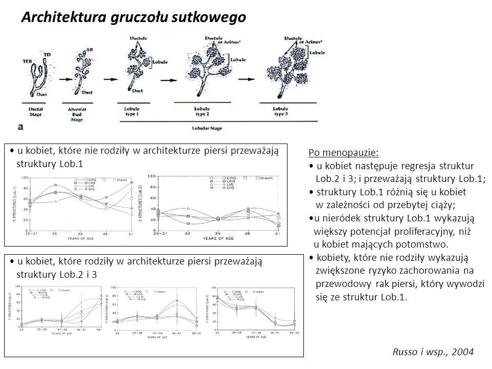 Architektura gruczołu sutkowego
