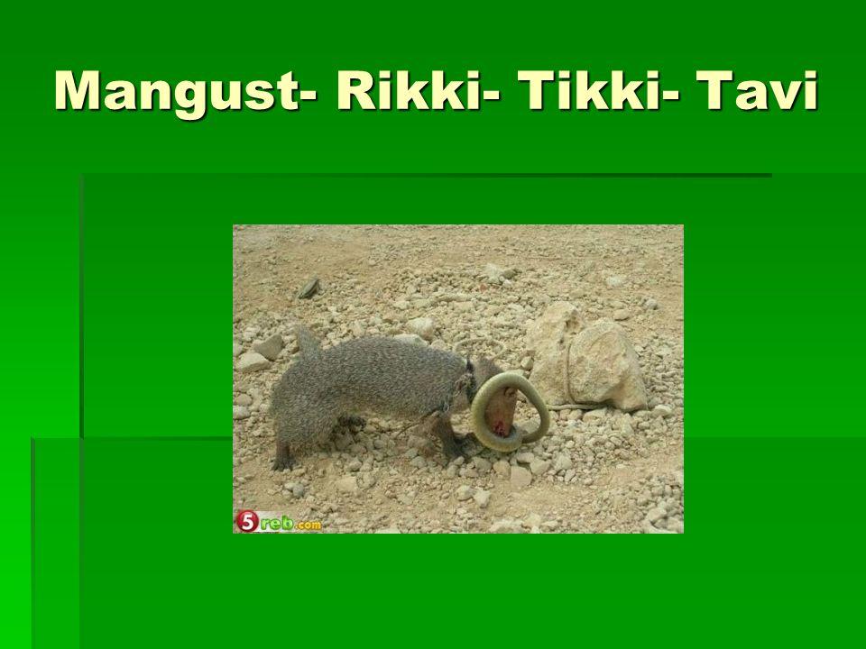 Mangust- Rikki- Tikki- Tavi
