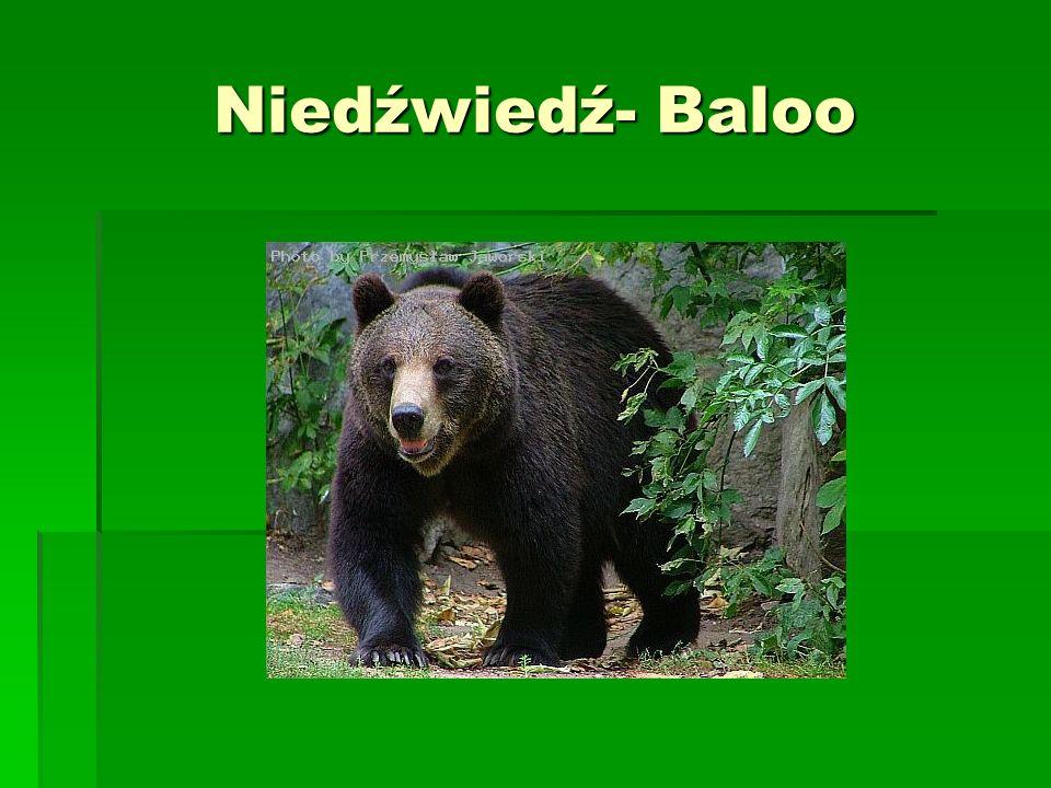 Niedźwiedź- Baloo