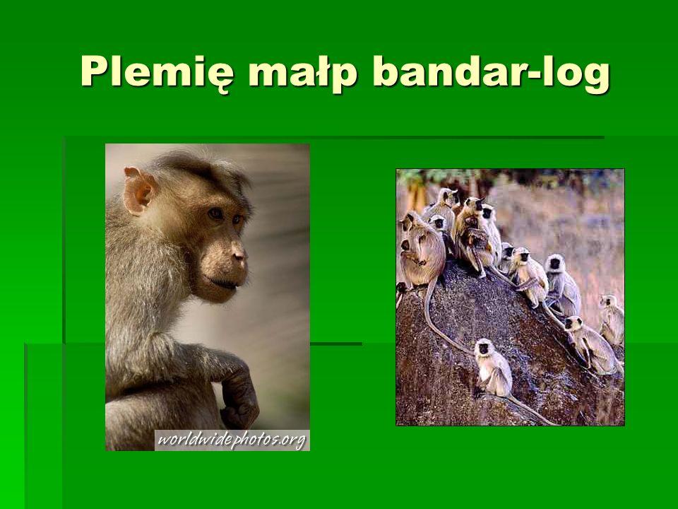 Plemię małp bandar-log