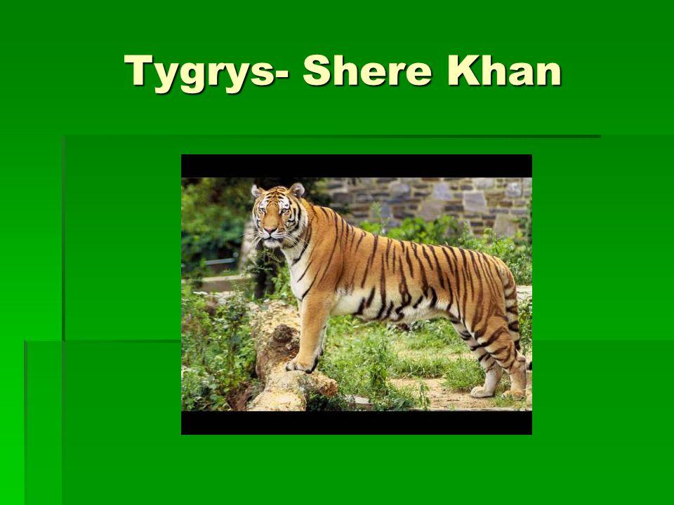 Tygrys- Shere Khan