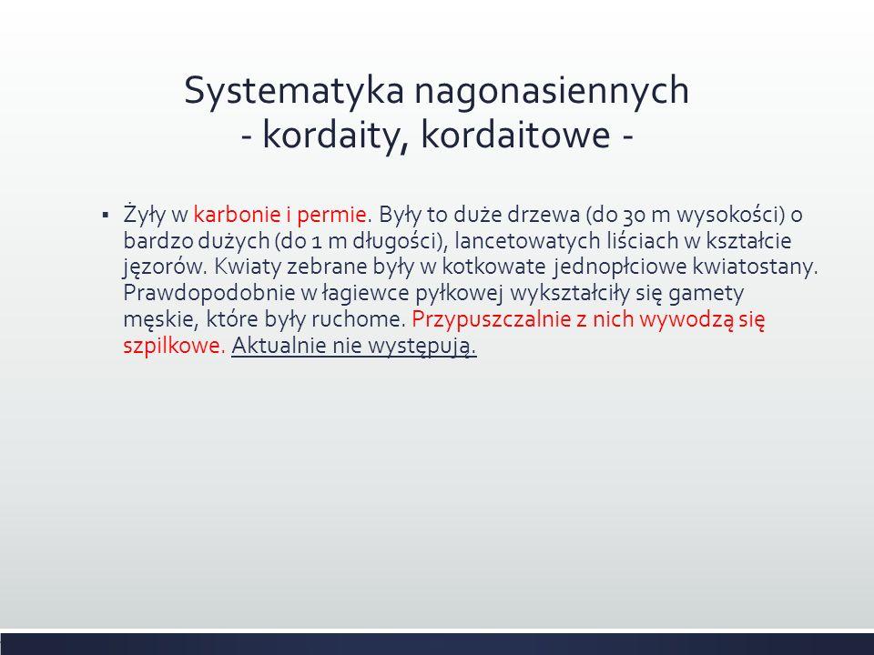 Systematyka nagonasiennych - kordaity, kordaitowe -