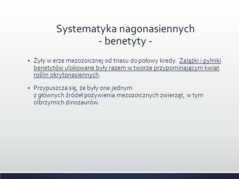 Systematyka nagonasiennych - benetyty -