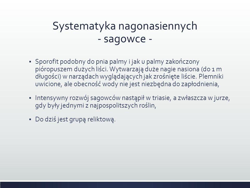Systematyka nagonasiennych - sagowce -